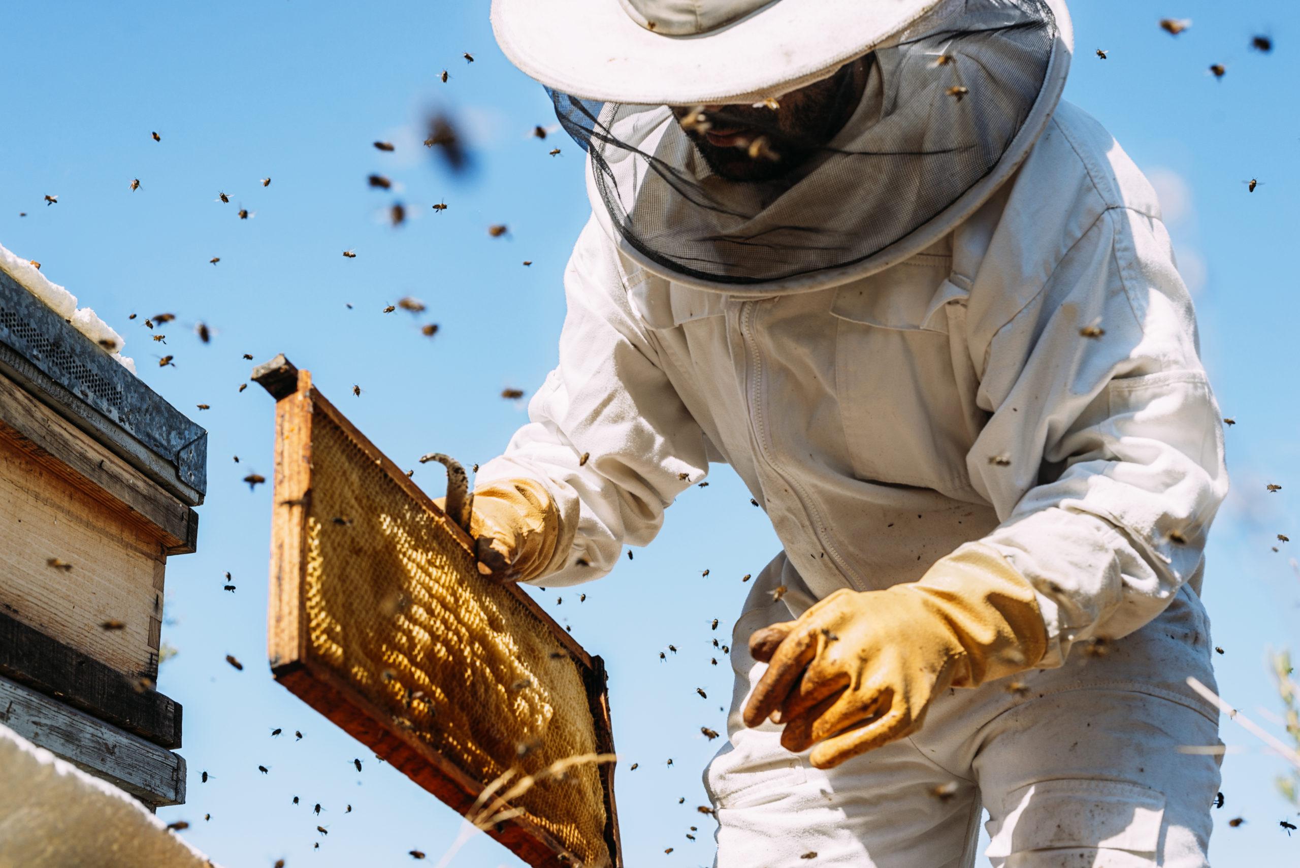Surveillance à distance des abeilles